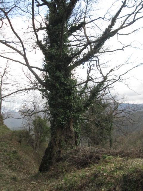 La fine del sentiero e l'arrivo a Macchia Vomano - Ph. Giovanni Leonardi