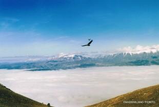 Ph. Massimiliano Fiorito -  I grifoni immortalati nei pressi della cima di monte le Quartora (1)
